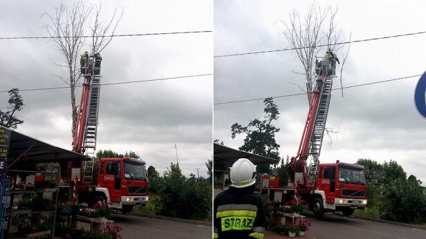 Akcja strażaków w Nowym Dworze Mazowieckim warszawa@tvn.pl
