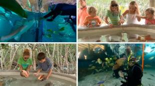 Interaktywny park wodny. Zanurz się w akwarium z tysiącami ryb