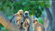 Thomas Vijayan/Comedy Wildlife Photo Awards 2020