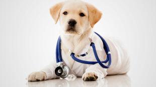 Futrzaści lekarze wykryją raka. Psy będą wspierać tradycyjne badania